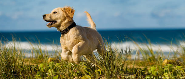 Einreisebestimmungen f r hunde nach d nemark for Urlaub auf juist mit hund